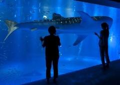 ま の 水族館 とじ WEB水族館 全国水族館ガイド